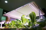 LED lamps used to grow plants