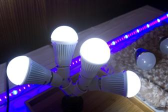 LED+light+bulb
