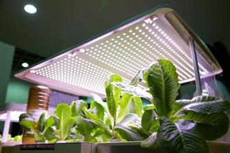 LED+lamps+used+to+grow+plants