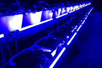 LED horticultural lighting devices used in a strawberry farm